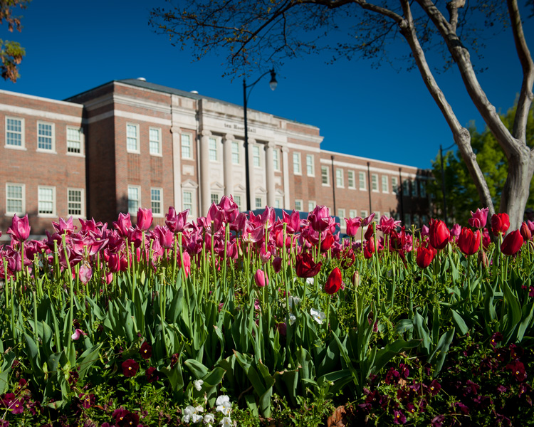 tulips outside of ten Hoor Hall
